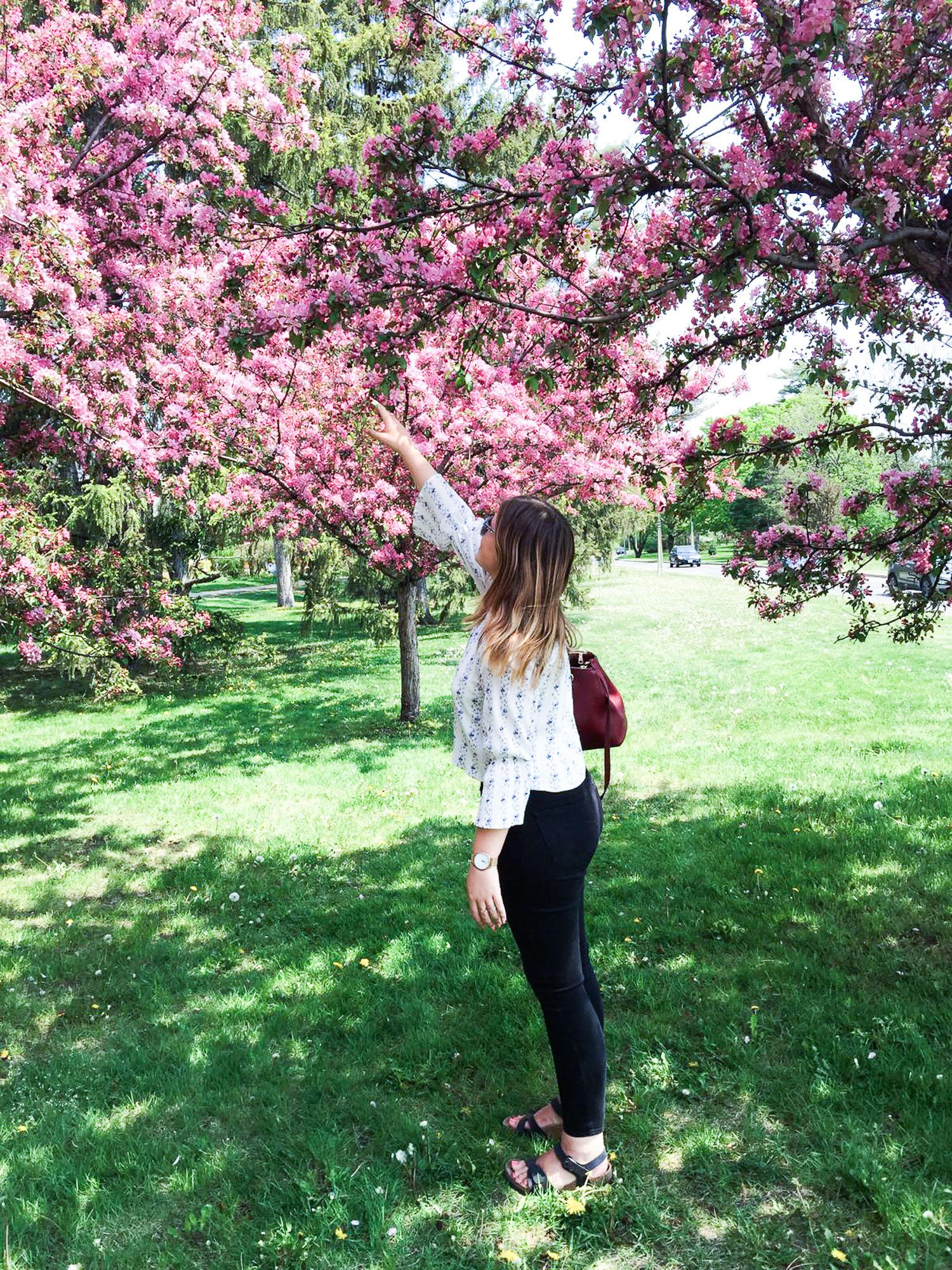 cherry blossom canada
