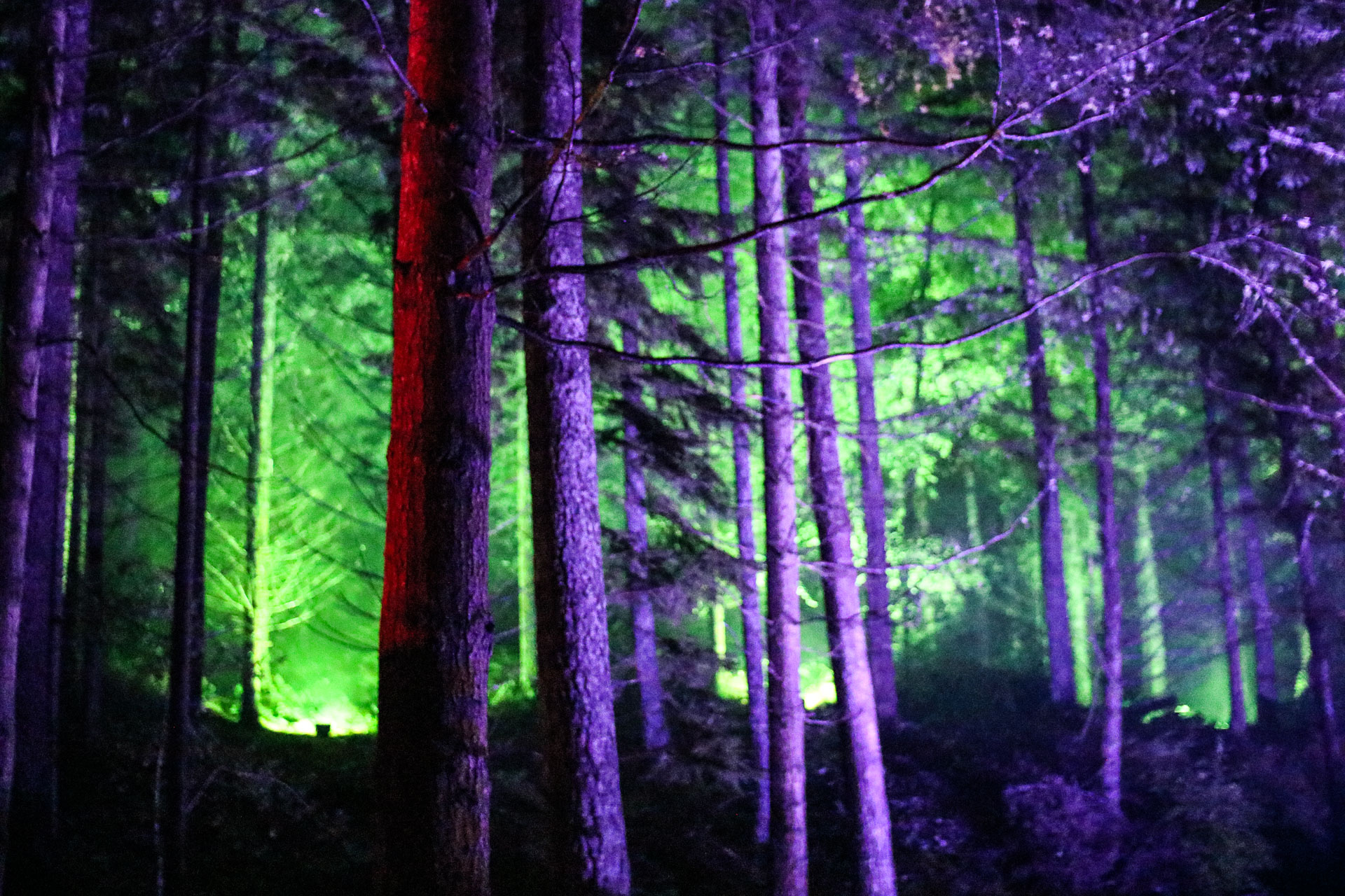 enchanted forest pitlochry scotland