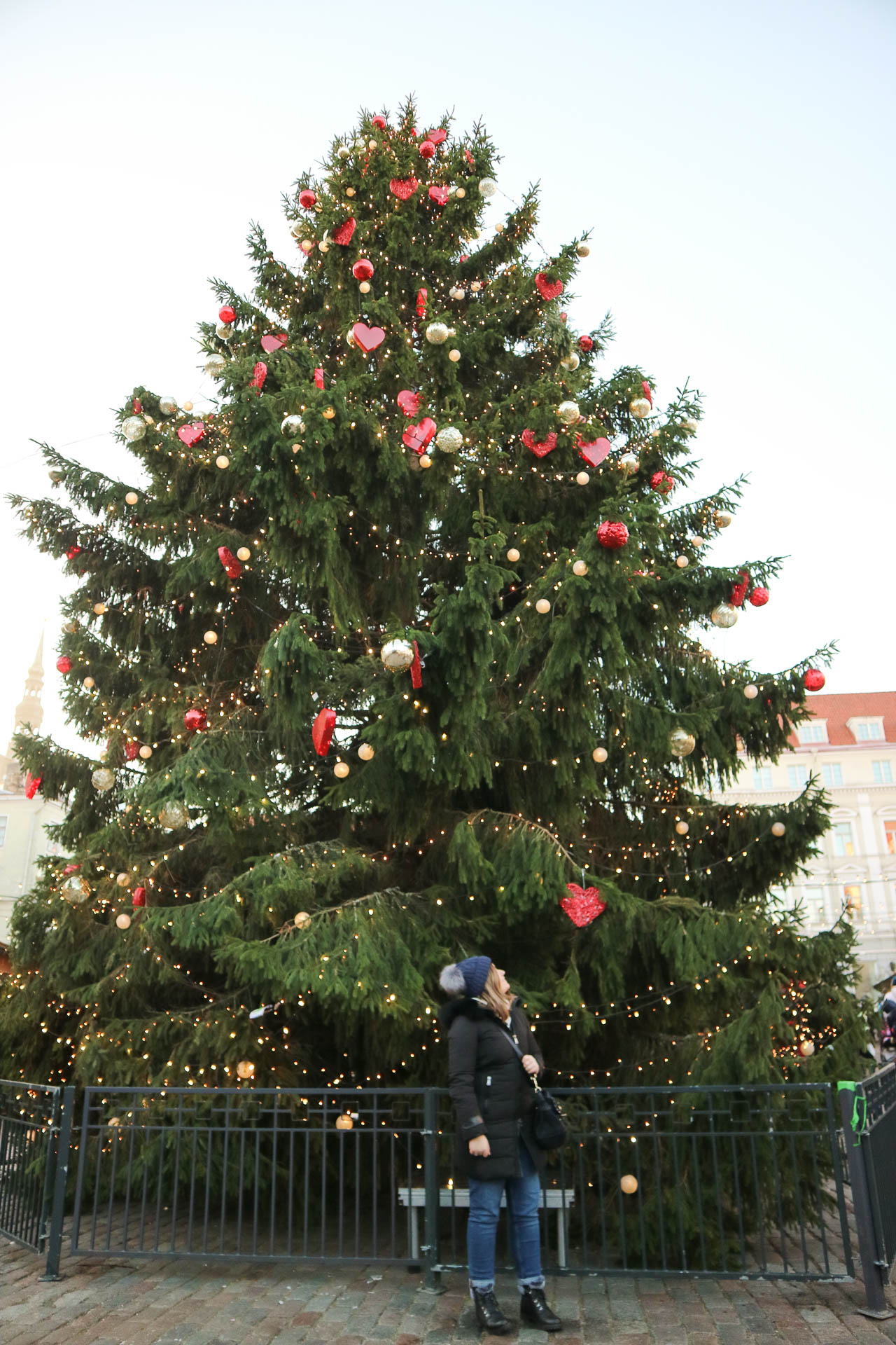 Tallinn city guide
